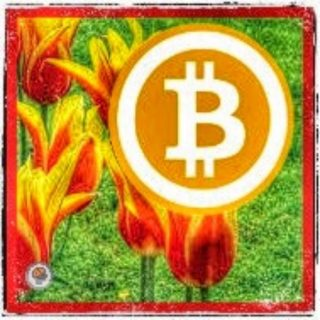 Are Tulip Mania and Bitcoin (BTC) Related?